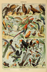 Different Type of Birds Chart