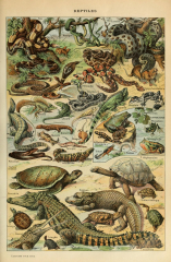 Different Type of Reptiles Chart