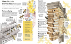 Bee Hive Activity Infographic Chart