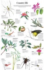 Country life Insects and Plants Chart